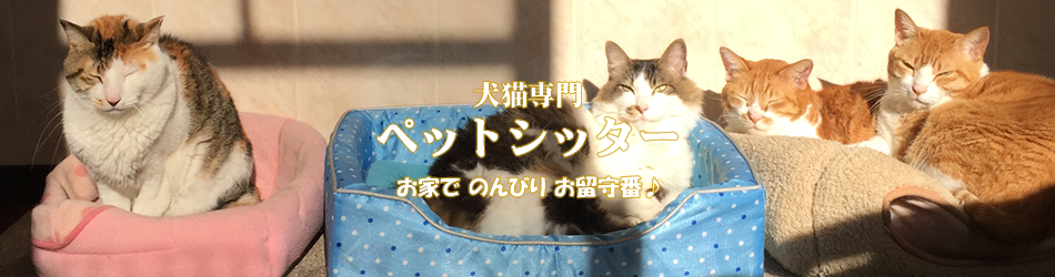 犬猫専門・ペットシッター